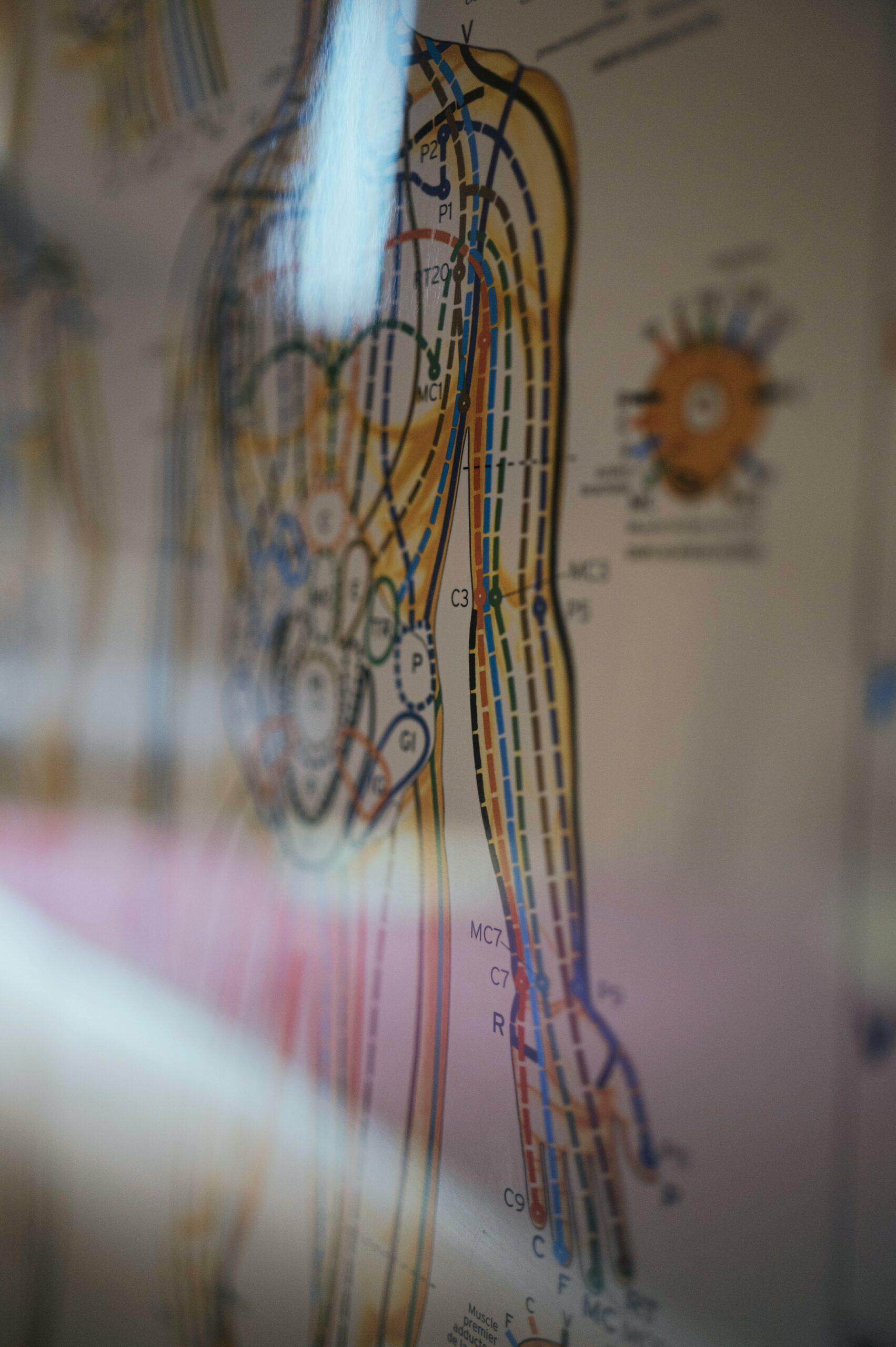 meridianen Sportmedisch Centrum Lebbeke acupunctuur herstel