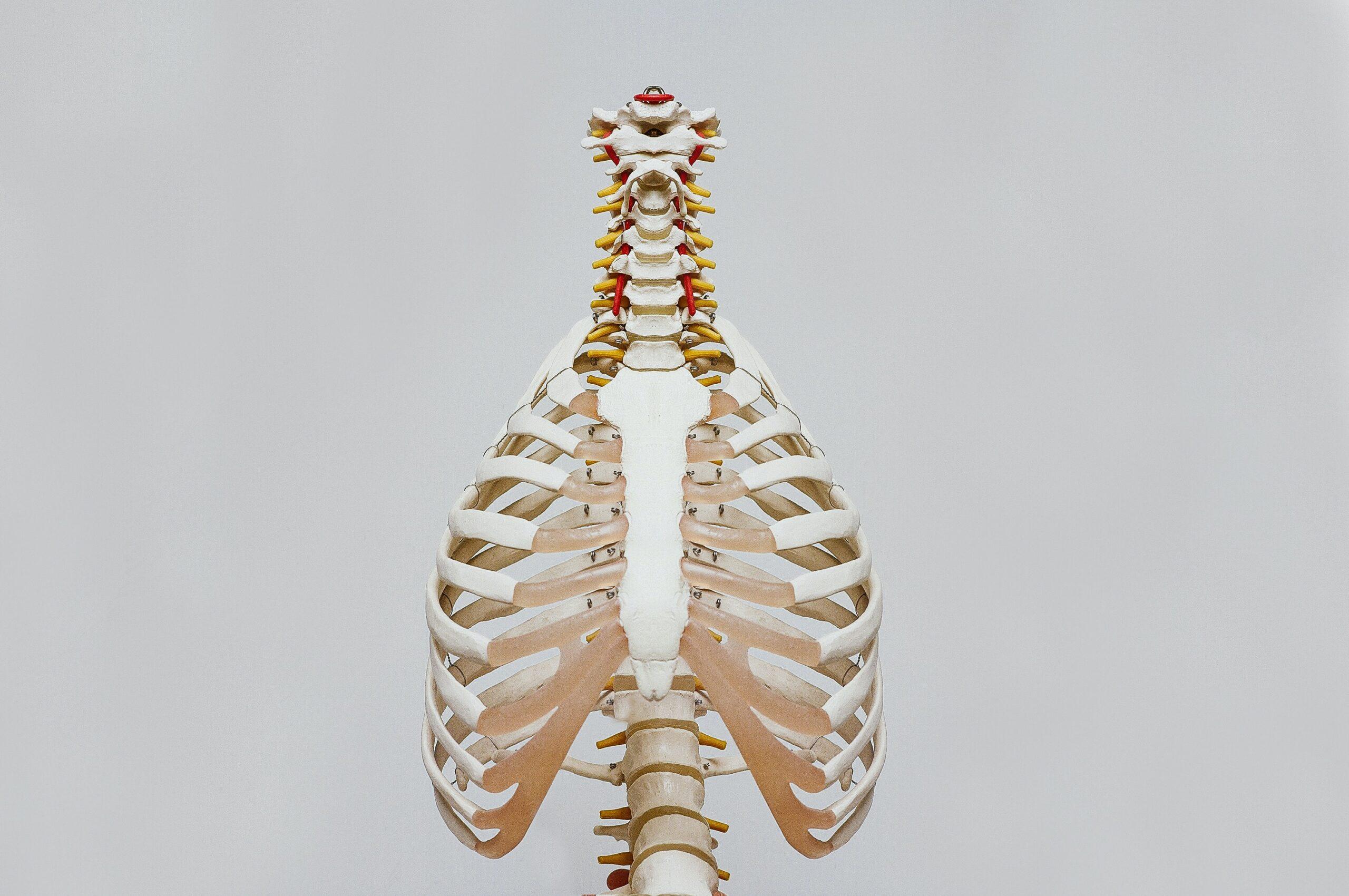 thorax skelet Sportmedisch Centrum Lebbeke longen klachten rug nek blokkade